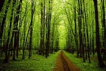 I LOVE TREES / I LOVE ALL TREES!!! / by Marina Castillo