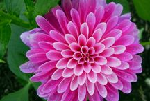Flowers Plants Gardens / by Kristen Olivo