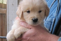 Puppy Love / For our golden retriever, Nala / by Ming Platt