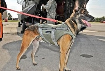 WORKING DOGS / K-9 HEROES / by Helen Johnson