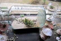 terrariums / by Amanda Briede