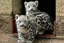 Snow Leopards, Cherish! / by Snow Dragonwyck