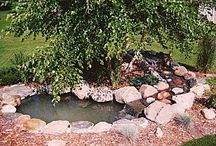 pond ideas / by Janette Shapland