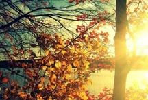 Seasons / by JoAnne Shea