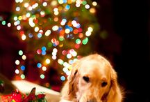 Golden Retriever love :) / by Kasey Budrock