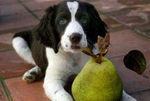 Cute animals & things 4 them / All kinds of doggy stuff, food, & just cute animals / by Taikhia Sanders