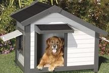 Bonafide Luxury Dogs / Bonafide with a budget. If I had a million dollars...... / by Bonafide Holistic Dog Food