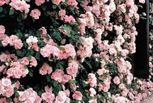 Secret Garden  / by Jessica Fernandez