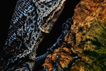 Monitor lizards / by William McLauchlan