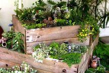 Garden style / by Amber Johnson