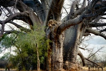Limpopo, South Africa / by Kristine Ocon