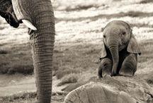 Cute Animals  :) / by Ashley O