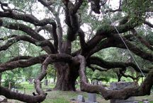 Old Cemeteries and monuments / by Lynn LaGrone