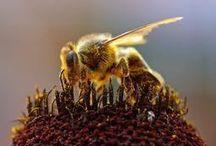 HONEY + BEES / by Rebecca Varidel