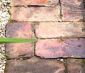 Bricks / by Helen Davis