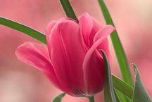 Cottage Garden / by Julie Curtis