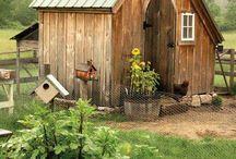 My pretend flock of chickens / by Kestrel Dunn
