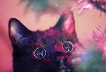 cats  / by Lauren Gough