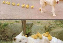 Cute animals / by Whitney Morgan