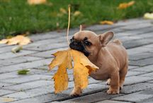 Cuteness!! / by Kathryn Speed