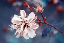 FlOwErS / by Maille EnLair