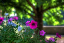 Flower Photography / by Eagle Eyrie Conference Center