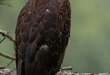 Eagles / by Scott Robertson