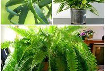 Plants / by Cheryl Tompkins