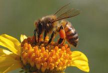 ´)(` .¸Bees & Bee Stuff / by Cheryl11091