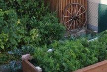New Vegetable garden ideas / by Captain Freeman Inn
