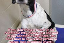 animal welfare & animal care. / Please adopt and save a life. Don't shop!!! / by Jacquelyn