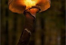 Mushrooms / by Janna Jones