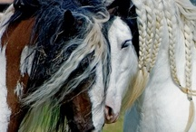 horses / by Julie Bell