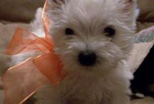 Puppies.. / by Alicia Melton