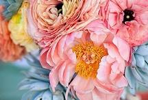 Blooms / fleurs / by Kara Firstenberger
