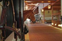 Dream Equestrian Centre / by Lauren McKinnon
