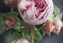 Roses pivoines renoncules / by Anne Marie Joncour-Guinebault
