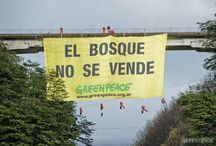 Campaña de Bosques / by Greenpeace Argentina