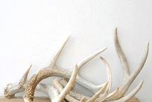 Antlers / by Kate Kennedy