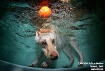 Doggie Wonders / by Monica Mingo