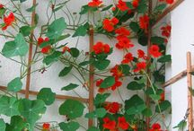 Grow wildly / Garden::vegetables::flowers::homegrown / by Thalia Ramsden