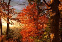 Autumn/Fall/Thanksgiving / . / by Joy Logan Burkhart