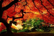Autumn Splendor / by Corbin Lee