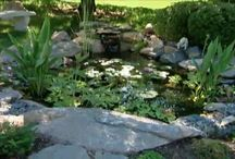 Fountains, Pools, and Ponds / by Ron Hazelton
