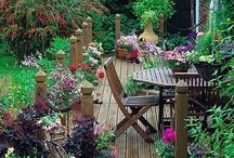 Garden Inspiration  / by Nirit Modai