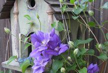 Gardening - Landscaping Shrubs / by Paula Robinson