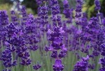 MY FAVORITE PLANTS / by Sharon Jones
