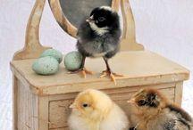 Chickanery / by Jennifer Walker