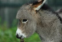 donkey  / by Kathrin Groth