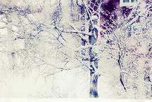 Winter❄ / by Bryanna Straugh